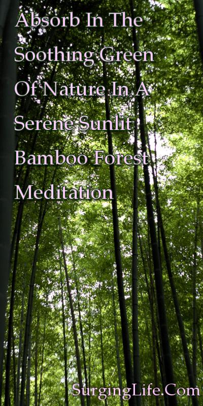 10 Minute Tree Meditation Video 4k UHD Sunlit Bamboo Forest