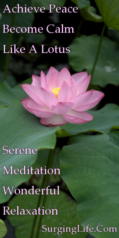 10 Minute Flower Meditation Video Serene Pink Lotus